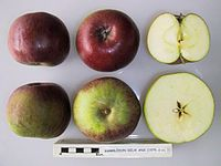 Cross section of Hambledon Deux Ans, National Fruit Collection (acc. 1975-019).jpg