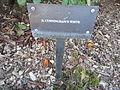 Crystal Springs Rhododendron Garden, Portland (2013) - 29.JPG
