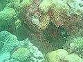 DSC00089 - recifes de coral - Naufrágio e recifes de coral no Nilo.jpg