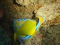 DSC00257 - peixe - Naufrágio e recifes de coral no Nilo.jpg