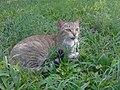 Dar-Es-Salaam Cat.jpg