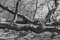 De Strubben-Kniphorstbos (d.j.b.) 09.jpg