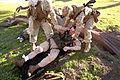 Defense.gov photo essay 090326-M-3699S-075.jpg