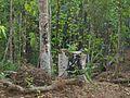 Deforestation-01, Khasia Hil, Srimongol, Moulvibazar, Bangladesh, (C) Biplob Rahman.jpg