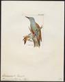 Dendropicus spodocephalus - 1820-1860 - Print - Iconographia Zoologica - Special Collections University of Amsterdam - UBA01 IZ18700201.tif