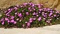 Detall floral de Port-Vendres (Costa Vermella-França) - panoramio.jpg
