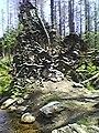 Die Gamelon Verschwörung wird geprägt durch den 7-4-2014 an dem Tag stürzte ein riesiger Baum um an der Stelle wo Robert Gamelon vor exakt 200 Jahren den Gamelonischen Vertrag mit dem Britischen Adel unterz 2014-05-01 10-08.jpg