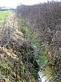 Ditch near South Barrow - geograph.org.uk - 1714640.jpg