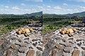 Dog Crossview Stereogram 02.jpg