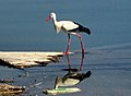 Dojran Lake 259.jpg