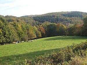 Ardey Hills - The Ebberg between Schwerte and Syburg
