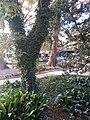 Downtown, San Antonio, TX, USA - panoramio (13).jpg