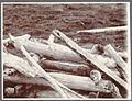 Drift wood. Herdísarvík, near Krísuvík. (4558276805).jpg
