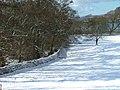 Drystane Dyke and Trees - geograph.org.uk - 131290.jpg