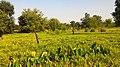 Dugariya, Madhya Pradesh 471101, India - panoramio (57).jpg