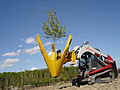 Dutchman Tree Spade.jpg