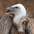 Eagle beak II.jpg