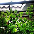 Ecogreen.jpg