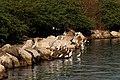 Egrets on LPPCHEA.jpg