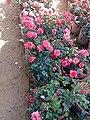 El Zohour Showroomمعرض الزهور بحديقة الاورمان 10.jpg