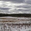 Elk Island Park's Bison Loop 1 (25325874186).jpg