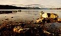 Evening at Lake Tekapo. (8431165503).jpg