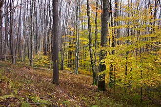 Randolph County, West Virginia - Fall in the forest