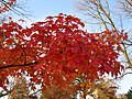 Fall Color V02 - panoramio.jpg