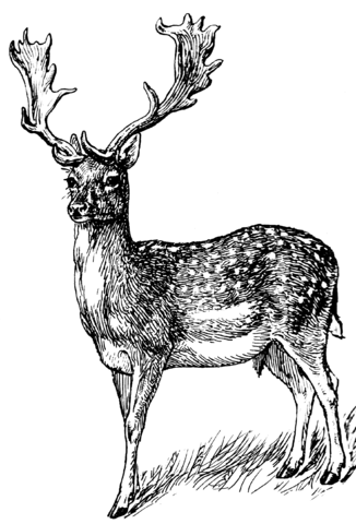 Image Result For Buck Logo Coloring