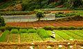 Farm land in Da Lat.jpg