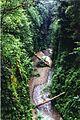 Fern canyon 7x10.jpg