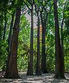 Fernando Peñalver Park Trees.jpg