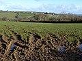 Field at Torrpark - geograph.org.uk - 719735.jpg