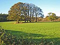 Field with trees on the Snape Castle estate - geograph.org.uk - 274541.jpg