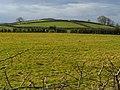 Fields, Windmill Road near Donaghadee (2) - geograph.org.uk - 739991.jpg