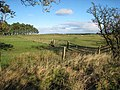 Fields near Cocklaw Walls - geograph.org.uk - 271429.jpg