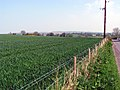 Fields off the Ballycoan Road - geograph.org.uk - 791577.jpg