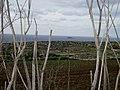 Filfla - panoramio (1).jpg