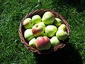 Filippa äpplen i korg.jpeg