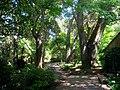 Filoli gardens - IMG 9345.JPG