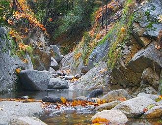 Santa Anita Creek - The creek near the First Water trail junction