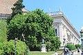 Fitolaca arborea al Campidoglio.jpg