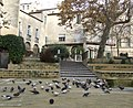 Flock of pigeons (6483818401).jpg