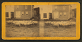 Flock of sheep. Anson, Me, from Robert N. Dennis collection of stereoscopic views.png