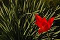 Flore de Bercy 4.JPG