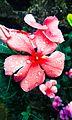 Flores com gotas de chuva.jpg