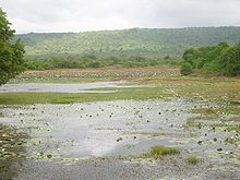 A lake mostly covered with floating aquatic plants. The further bank is lined with trees and a hill is in the background.