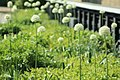 Flower Bed On The Highline In New York City (219513575).jpeg