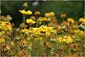 Flower Shiraz.jpg
