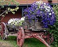 Flower Wagon, Sisters, OR 9-1-13zzp (9880309813).jpg